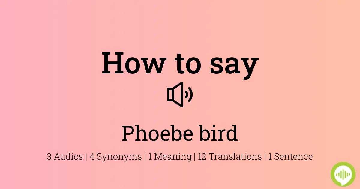 50++ Phoebe name pronounce information