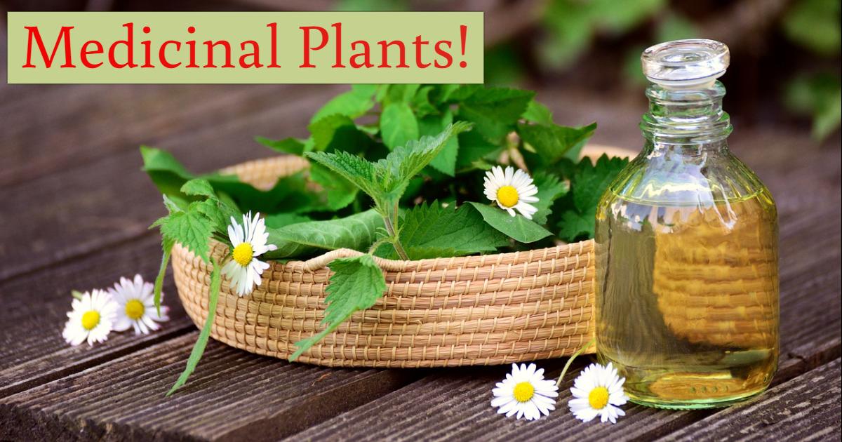 Guess The Medicinal Plant! thumbnail