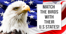 Match The Birds With Their U.S States!