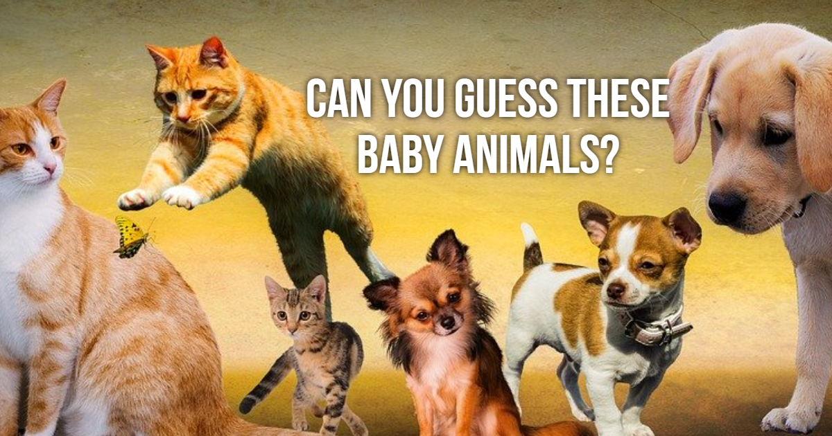 Can You Guess These Baby Animals? thumbnail
