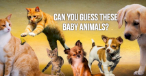 Can You Guess These Baby Animals?