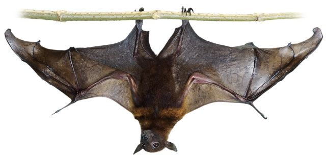 Facts About Bats! thumbnail