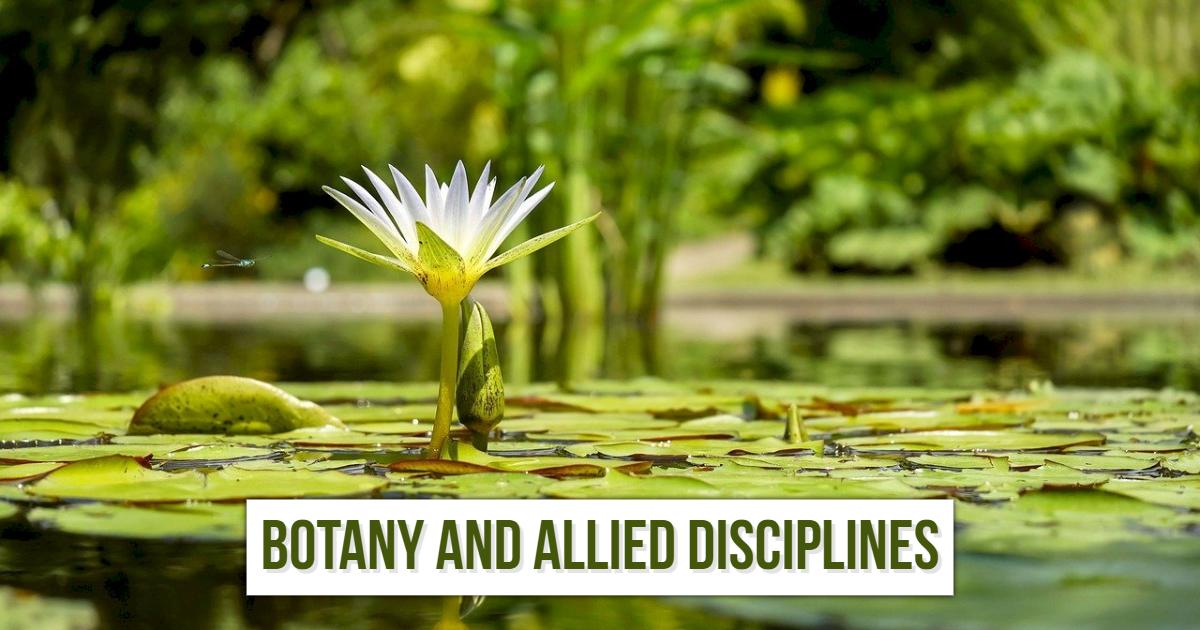 Botany and Allied Disciplines thumbnail