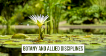 Botany and Allied Disciplines