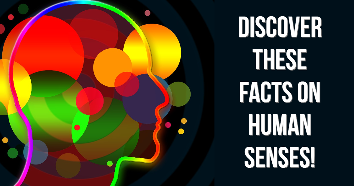 Discover These Facts On Human Senses! thumbnail