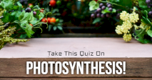 Take This Quiz On Photosynthesis!