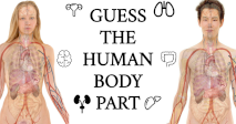 Guess the Human Body Part!