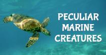 Peculiar Marine Creatures