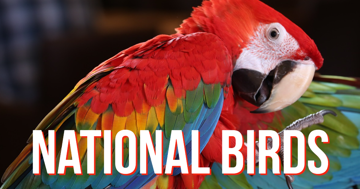 Countries and their National birds thumbnail