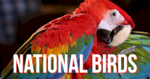 Countries and their National birds