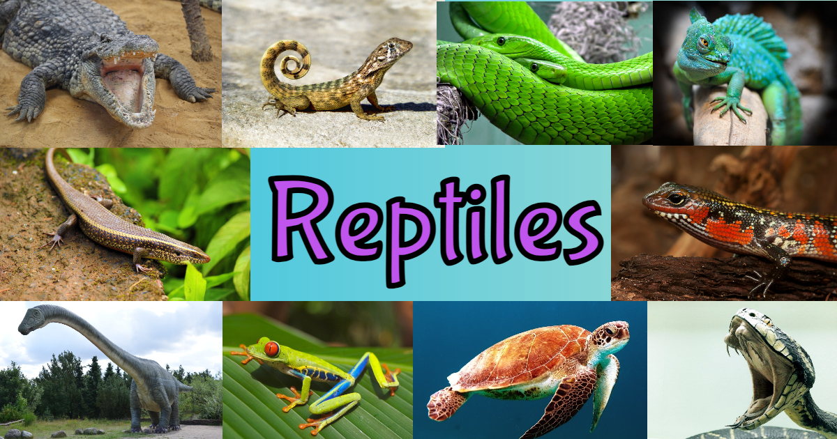 Reptile Facts Quiz For Kids! thumbnail