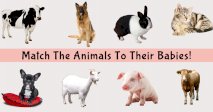 Match The Animals To Their Babies!