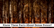 Know These Facts About Dense Forests!