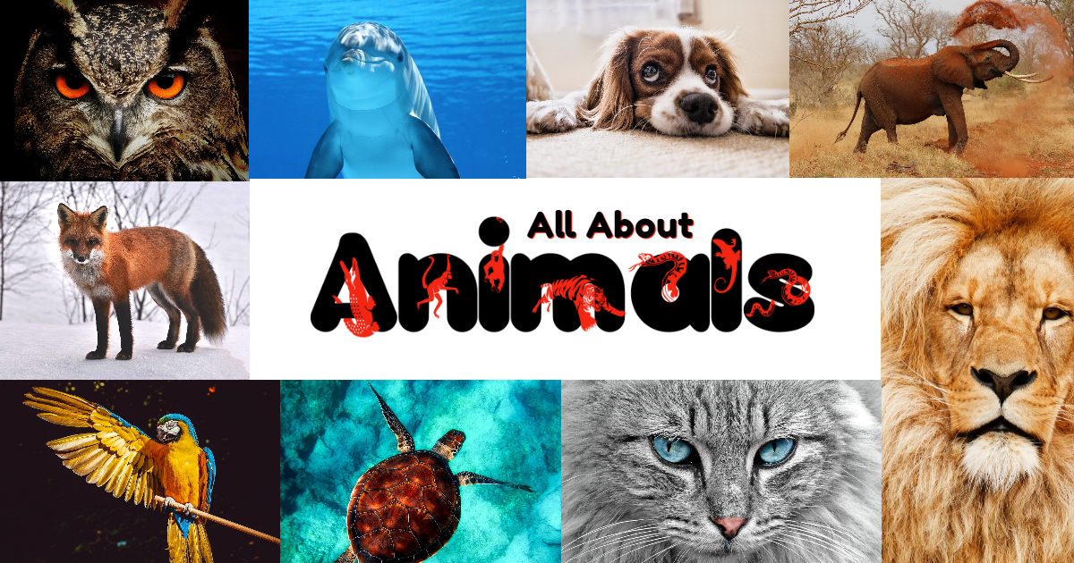 All About Animals! thumbnail