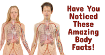 Have You Noticed These Amazing Body Facts!