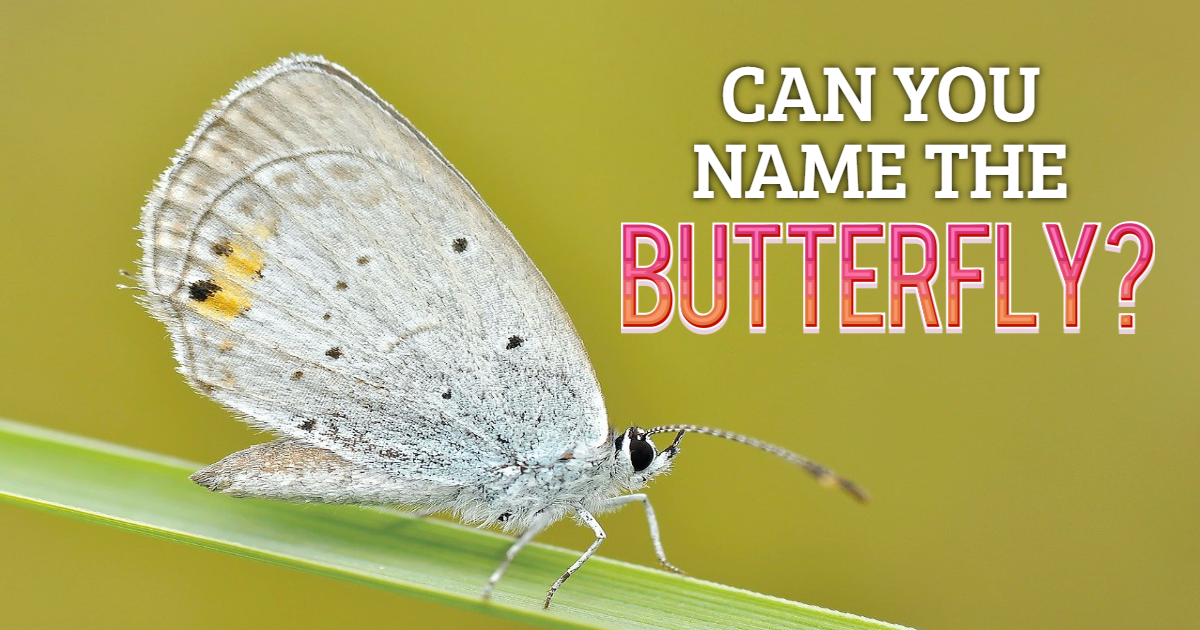 Can You Name the Butterfly? thumbnail