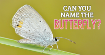 Can You Name the Butterfly?