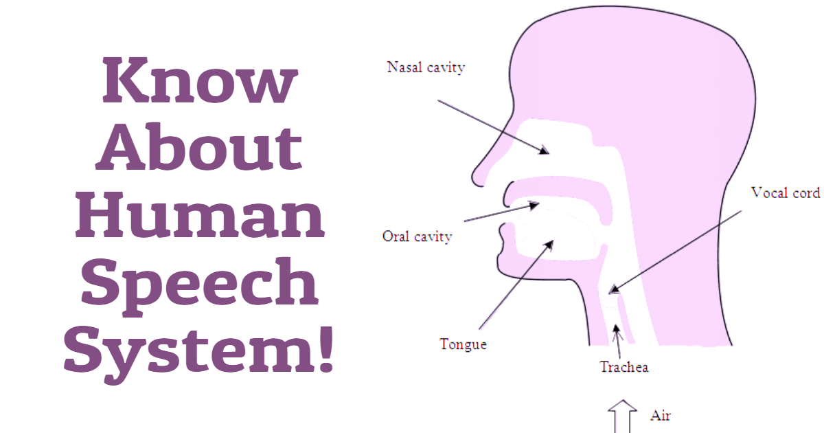 Know About Human Speech System! thumbnail